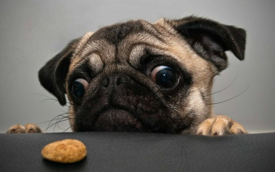 perro_y_galleta