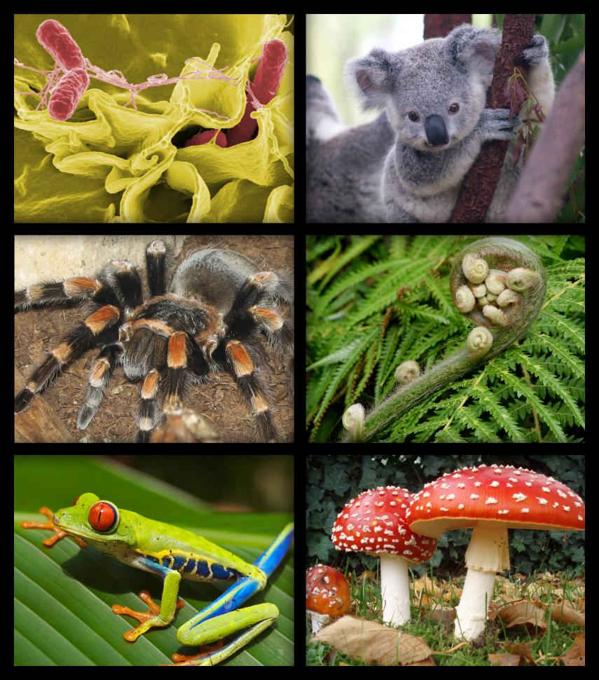 biology-organism-collage