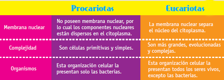 eucariotas_proca