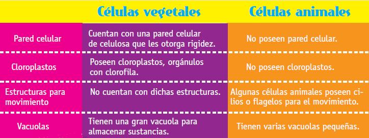 vegetales_animales