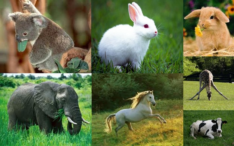 Lista de vocabulario de animales en español-inglés (con pronunciación). Incluyo mamíferos (mammals), acuáticos, pájaros (birds), reptiles e insectos.