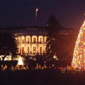 Árbol de la Casa Blanca – Washington DC