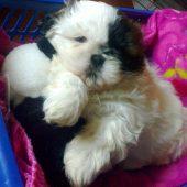 Jachi bebé