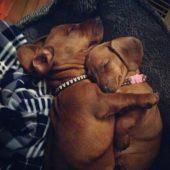 Cachorros de Alexia