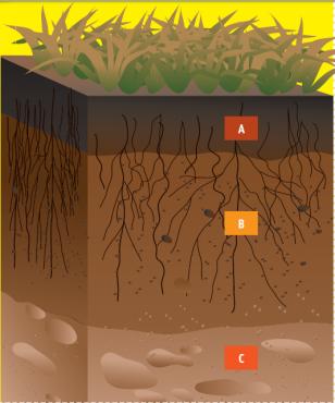 El escolar el suelo for Proceso de formacion del suelo