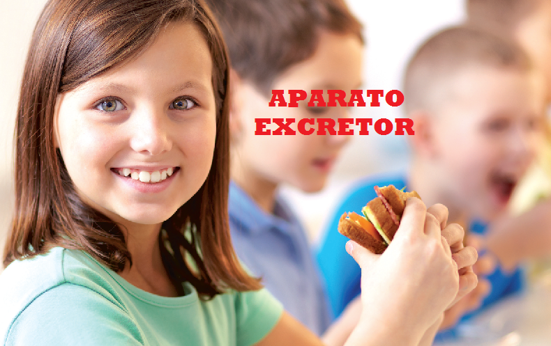 APARATO-EXCRETOR-1